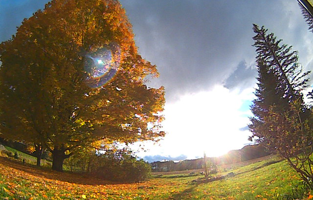 Viewing Fall Foliage With BloomSky
